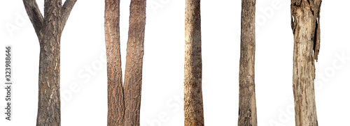 Fotografie, Obraz isolated set tree trunk Collection on White background.