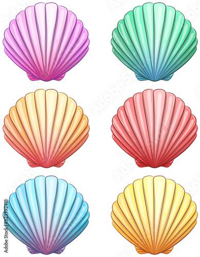Farbenfrohe Muscheln - Vektor-Illustration Fototapete
