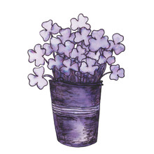 Pen And Ink Shamrocks Illustration. Shamrocks In A Bucket. Hand-drawn Doodle Purple Illustration On A White Background Isolated. Decorative Element For Traditional Design For St. Patrick's Day
