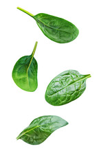 Spinach Leaves On A White Isolated Background