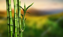 Many Bamboo Stalks On Blurred ...