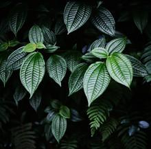 Deep Green Tropical Textured L...