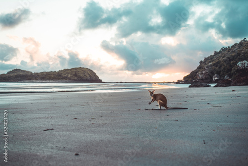Fotografía Kangaroo at beach against cloudy sky during sunrise