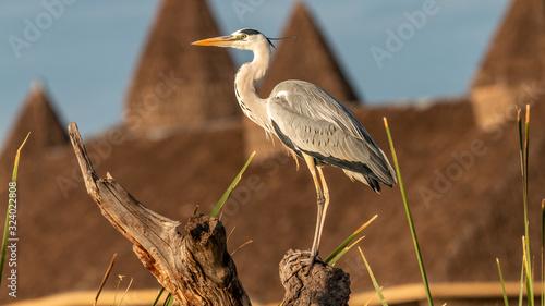 Photo Oiseaux - Masaï Mara Kenya