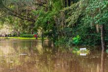 Post Hurricane Flooding Leaves...