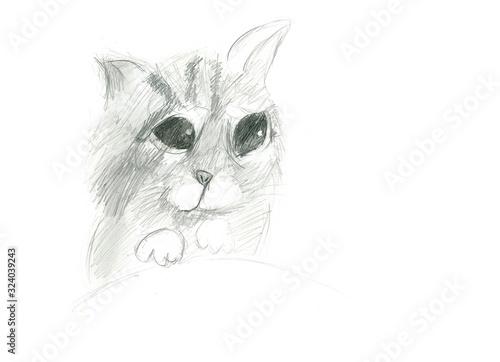 Fototapeta Kot szkic ołówkiem, rysunek dziecka obraz