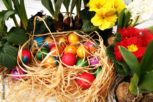 Fototapety, obrazy: Easter eggs hiding in the grass with daffodil, tulips and other spring beautiful flowers