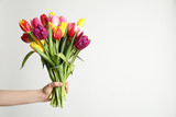 Fototapeta Tulipany - Woman holding beautiful spring tulips on white background, closeup. Space for text