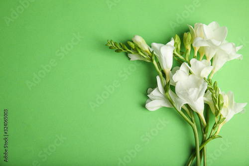 Fototapeta Beautiful spring freesia flowers on green background, flat lay. Space for text obraz