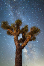 Joshua Tree Milky Way Night