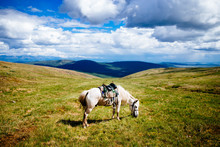 White Saddled Horse Grazing On Rolling Plains And Hilltops.