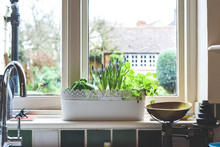 Window Box With Herb Garden An...