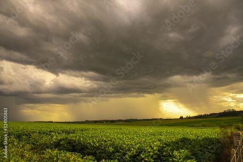 Fotografía Tropical storm in a soybean field in southern Brazil