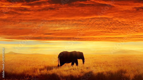 Lonely Elephant against sunset and beautiful clouds in savannah. Serengeti National Park. Africa. Tanzania.