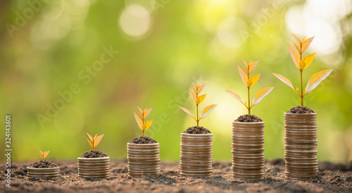 Fototapeta Coin stack with young green sprout on top. Business success, Financial or money growing concept obraz