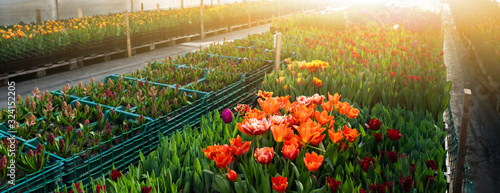 Greenhouses for growing flowers. Floriculture industry Tableau sur Toile