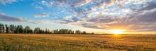 Wheat Field Illuminated By The...