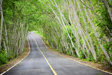 Tree Tunnel On Highway Lane With Yellow Line Marking On Road Surface For Separate Lanes In Kaeng Krachan National Park Of Thailand
