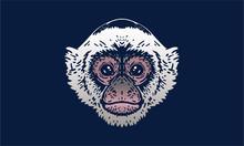 Capuchin Monkey On Dark Background