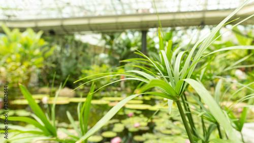 연못속의 식물