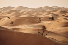 Trees In Desert Landscape