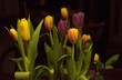 canvas print picture - Tulpe