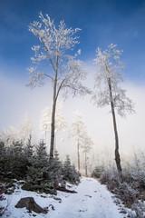 Oszronione drzewa w górach