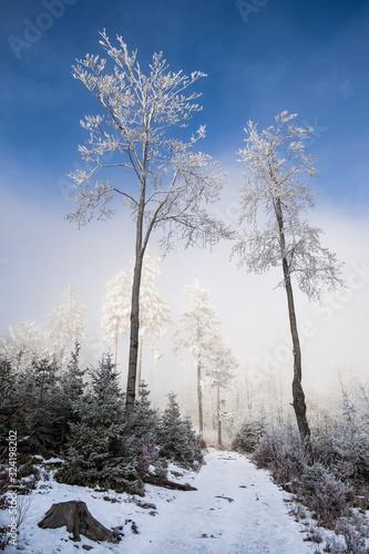 Oszronione drzewa w górach - fototapety na wymiar