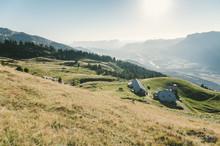 Brebis En Estive Dans Les Alpes