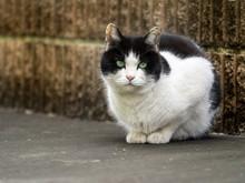 猫 Cat 16