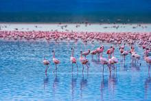 Africa. Kenya. The Lake Nakuru...