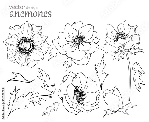 Set of black and white anemone flowers isolated on a white background Canvas Print