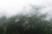 Moody Forest With Fog And Clouds Hanging Low