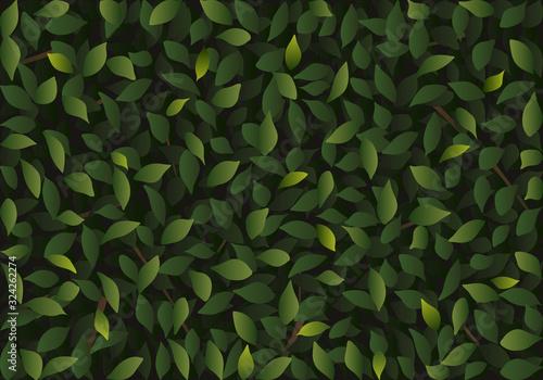 fond de feuillage vert pour illustrer les catalogues de jardinerie en symbolisant le printemps et la protection de l'environnement.