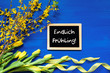 canvas print picture - Blackboard With German Text Endlich Fruehling Means Hello Spring. Yellow Spring Flowers Like Tulip And Branches. Festive Decoration With Ribbon. Blue Wooden Background