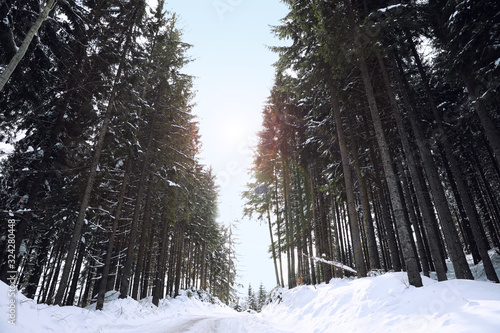 Photo Picturesque view of snowy coniferous forest on winter day, low angle view