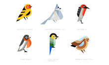 Colorful Stylized Birds Collection, Western Tanager, European Crested Tit, Myzomela, Flame Robin, Long Tailed Broadbill, Common Chaffinch Vector Illustration