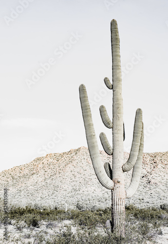 Plakat Southwest Desert Cacti Modern Home Decor