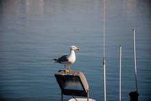 Seagull Landing On A Port Lam...
