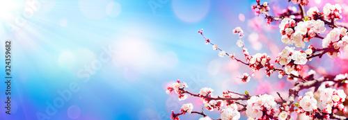 Fotografia Blooming In Spring - Almond Blossoms In Sunny Sky