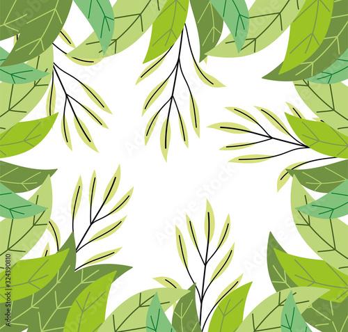 Obraz herbs foliage leaves vegetation wild botany background - fototapety do salonu