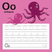 Alphabet Tracing Worksheet For Preschool And Kindergarten To Improve Basic Writing Skills, Letter O, Octopus, Vector, Illustration