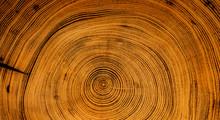 Old Wooden Spiral Tree Cut Sur...
