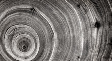 Black And White Spiral Of Wood...