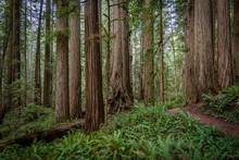 Hiking Trail Winding Through M...