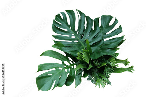 Tropical green leaves forest plant Monstera, fern, and climbing bird's nest fern foliage plants floral bunch for wedding and ceremony decoration isolated on white background with clipping path Canvas