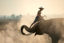 The Elephant Mahout Is Pretend...