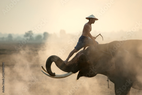 the-elephant-mahout-is-pretending-to-be-on-the-elephant-s-back