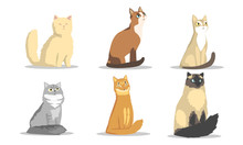 Collection Of Different Cats B...
