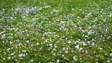 Large Hail Falls On The Green ...
